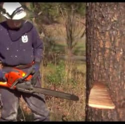 How to cut down a tree with a chain saw
