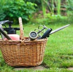 essential weeding tools